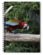 A Very Colorful And Bright Macaw Bird Perched On A Branch Spiral Notebook