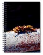 A Vespid Wasp  Spiral Notebook