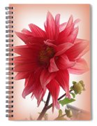 A Vision In  Coral - Dahlia Spiral Notebook