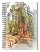 A Walk Among The Giant Sequoias Spiral Notebook