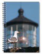 A Western Gull  Larus Occidentalis Spiral Notebook