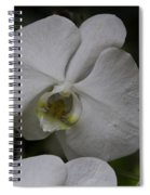 A White Orchid Flower Inside The National Orchid Spiral Notebook