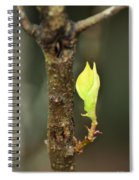 A Winter Sprout Spiral Notebook