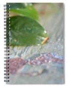 A Winter's Morning Light Spiral Notebook
