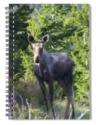 A Young Moose  Spiral Notebook