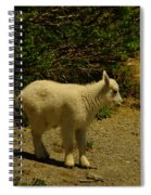 A Young Mountain Goat Spiral Notebook
