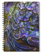 Abalone Shell 6 Spiral Notebook