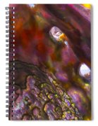 Abalone Shell Spiral Notebook