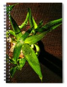 Above The Bamboo Spiral Notebook