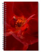 Abstract Red Rose 1a Spiral Notebook