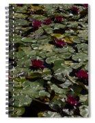Abundance In Crimson  Spiral Notebook