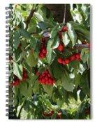 Abundant Cherries Spiral Notebook