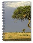 Acacia Trees On Serengeti Spiral Notebook