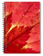 Acer From Beneath Spiral Notebook