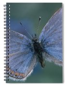 Acmon Blue Butterfly Plebejus Acmon Spiral Notebook