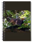Acorn Grip Spiral Notebook