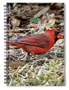 Acorn Hunting Spiral Notebook