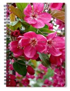 Adams Crabapple Blossoms Spiral Notebook