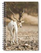Addax Addax Nasomaculatus Spiral Notebook