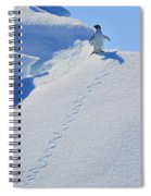 Adelie Penguin On Bergie Bit Spiral Notebook