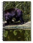 Adhd Bear Spiral Notebook