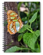 Admiring The Garden Spiral Notebook