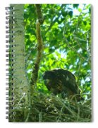 Adolescent Eagle Eating A Fish Spiral Notebook