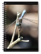 Adorable Dragonfly With Border Spiral Notebook