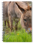 Adorable Mini-burro Spiral Notebook