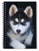Adorable Siberian Husky Sled Dog Puppy Spiral Notebook
