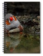 Adorable Zebra Finch Taking A Bath Spiral Notebook