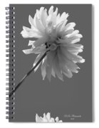 Adored In Bw Spiral Notebook