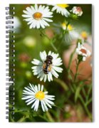 Adult Female Drone Fly Aka Bee Mimic Spiral Notebook