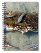 Adult Male Blue Crab Spiral Notebook