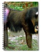Adult Male Mandrill Papio Sphinx Spiral Notebook