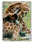 Adult Reticulated Giraffe Spiral Notebook