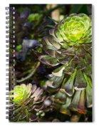 Aeonium Glow Spiral Notebook
