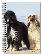 Afghan Hound Dogs Spiral Notebook
