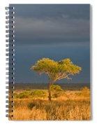 African Acacia Sunrise Spiral Notebook