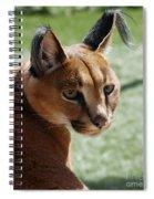 African Caracal Lynx  Spiral Notebook