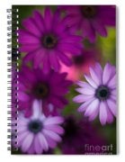 African Daisy Collage Spiral Notebook