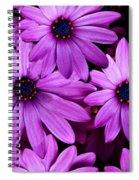 African Daisy Photo Digital Art Spiral Notebook