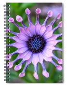 African Daisy - Square Format Spiral Notebook