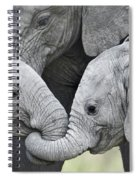 African Elephant Calves Loxodonta Spiral Notebook