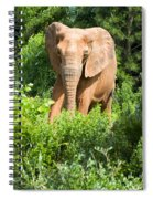 African Elephant Coming Through Trees Spiral Notebook
