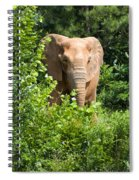 African Elephant Eating In The Shrubs Spiral Notebook