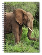 African Elephant Grazing Serengeti Spiral Notebook