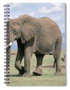 African Elephant Loxodonta Africana Spiral Notebook