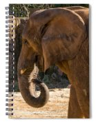African Elephant Profile Spiral Notebook