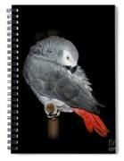 African Grey Parrot Spiral Notebook
